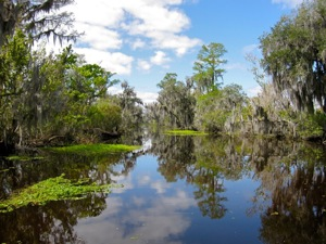 Airboat Adventure Tours