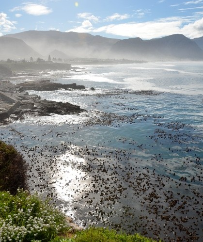 Hermanus Bay South Africa