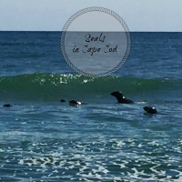 Spotting seals swimming from the beach in Cape Cod